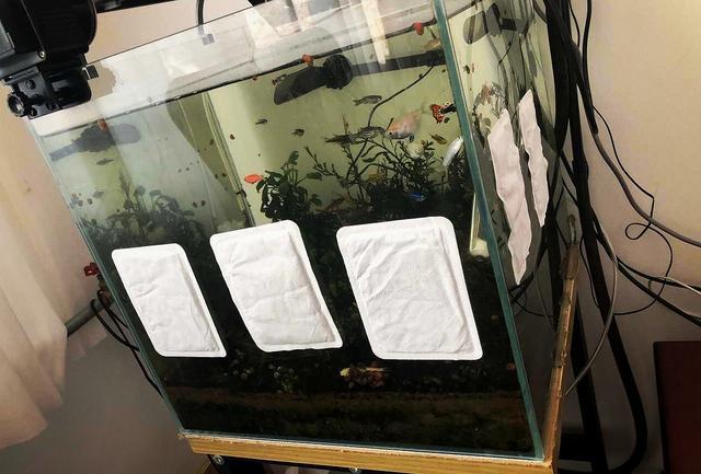 【智慧职教】,原创 停电了怕鱼冻着,男子在鱼缸四周贴满暖宝宝,下班后:被迫加餐?