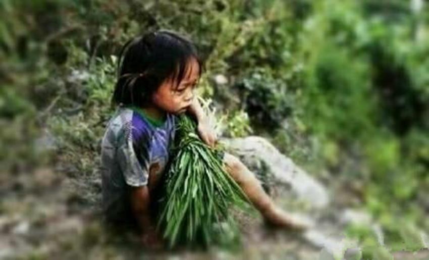 看得人心酸!4岁小女孩早当家,帮爷爷奶奶割草,眼里充满了辛酸