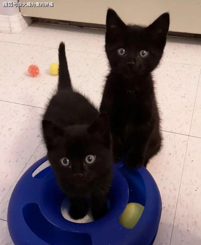 原创 三只小猫被遗弃,可它们主动去向路人求助,还真收获了美好喵生