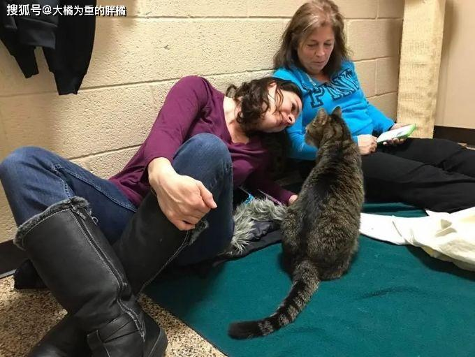 【智慧职教】,原创 老猫失踪两年,当和家人再次相遇时,它的动作让家人顿时感动哭了