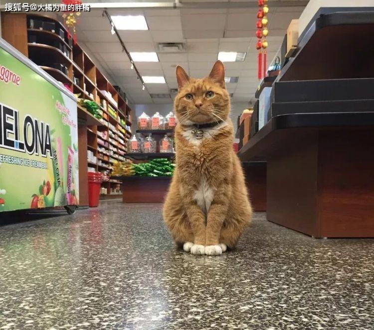 """【智慧职教】,原创 橘猫每天蹲在店里""""招财"""",9年来始终坚守岗位,老板窃喜没白养"""