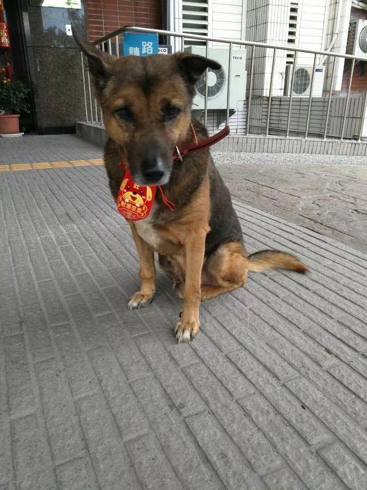 【智慧职教】,原创 狗狗为警局看门十年,老了以后却被巡逻车送进了收容所……