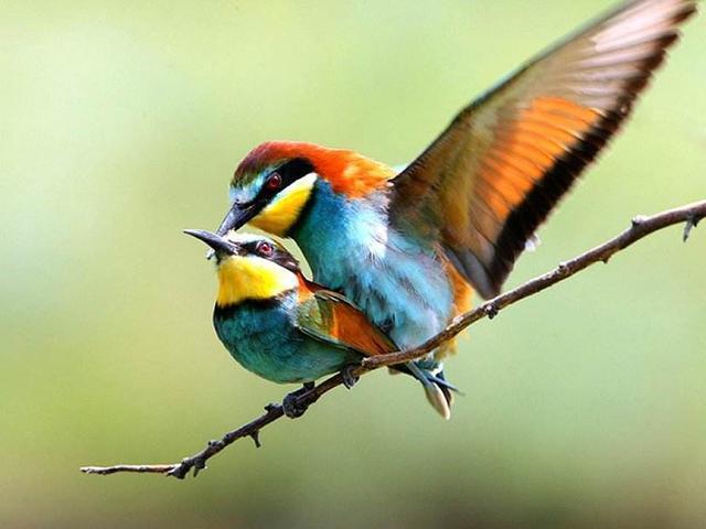 爱情鸟来临,谱写浪漫的星座