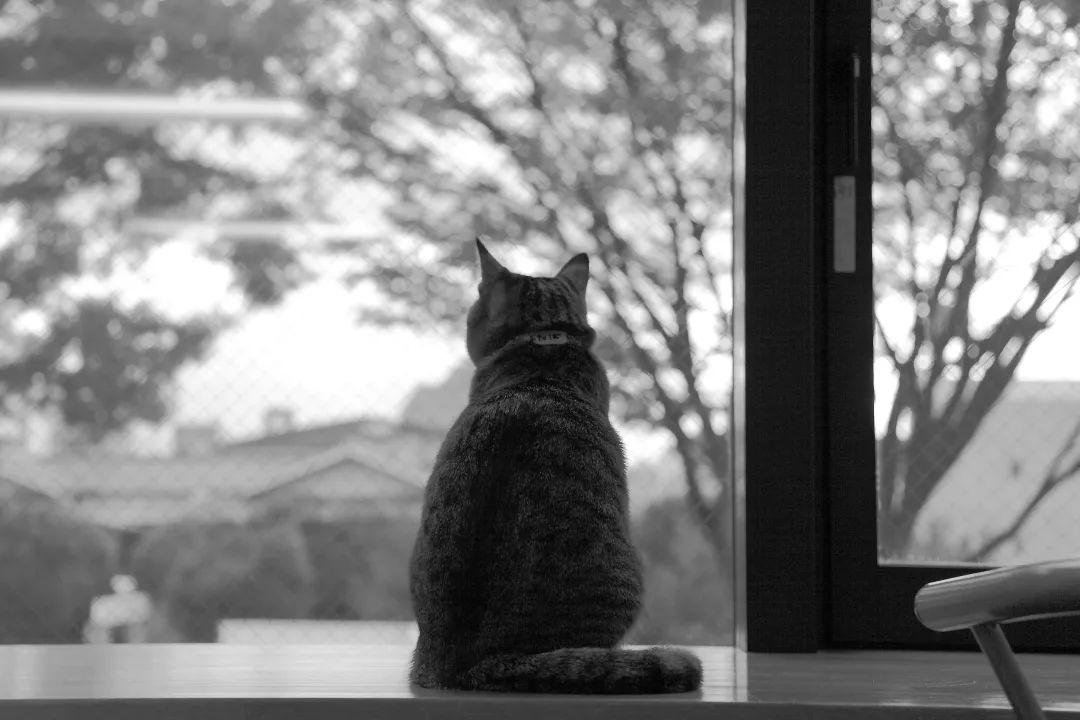 回家过年,我的猫成了留守儿童