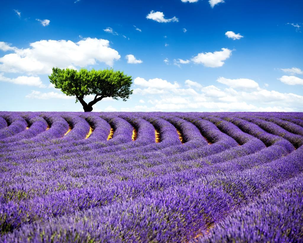 原创            2020年暑假期间,我打算带着你去法国普罗旺斯拍薰衣草