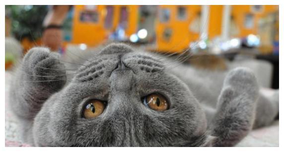 主人惊喜发现猫咪指纹能解锁!喵一脸无奈:瞧你那没见过世面的样