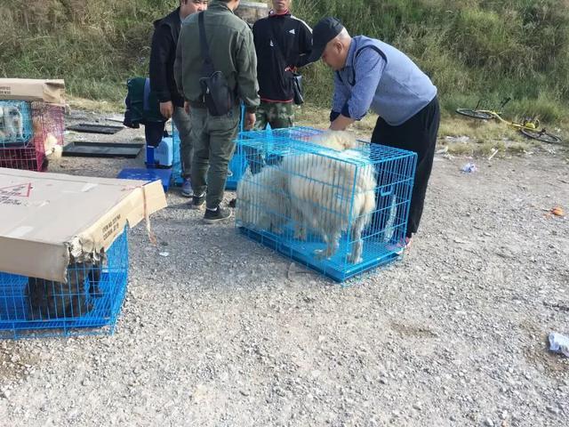 狗贩卖萨摩耶800元,买家砍价500元,狗贩一口答应!