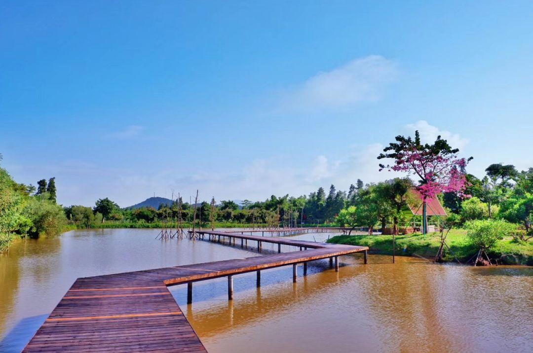 珠海十里莲江变美了!这个春节一定要去逛