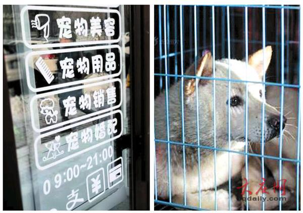 """春节期间""""留守""""宠物寄养费用上涨 较平时每天多10元"""