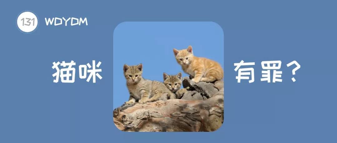澳大利亚宣告对200万只野猫的战争,原因:猫破坏了生态平衡