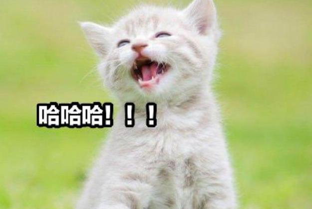 让奶奶来养猫会怎么样?90%猫咪的内心独白:你会从此失去我的