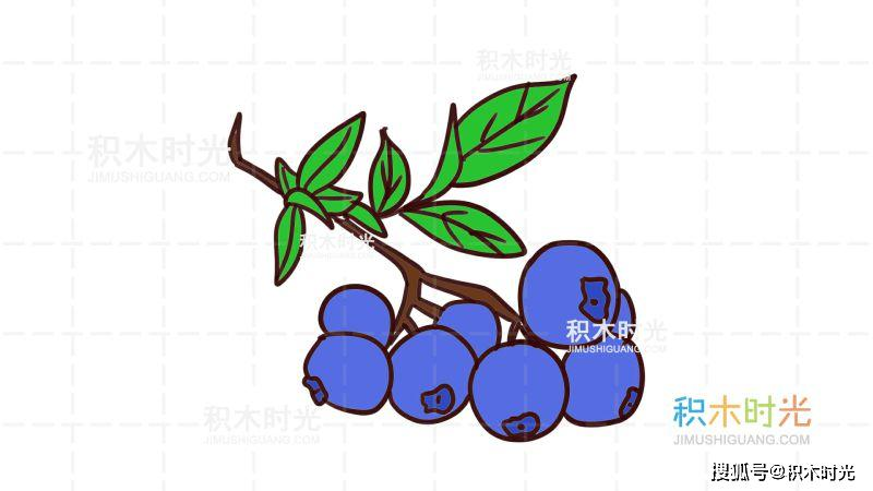 蓝莓简笔画教程,画蓝莓简笔画,积木时光简笔画
