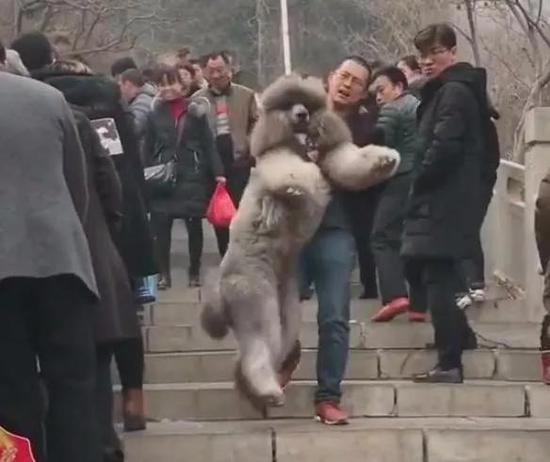 原创            过年带狗狗爬山,主人要是没有准备好,等下得把它抱下山