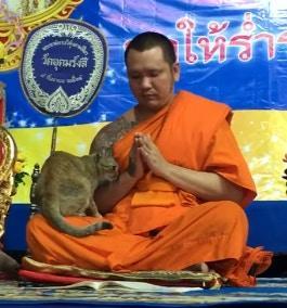 原创            猫咪在僧人念经时撒娇,他多次挣扎后放弃,果然还是撸猫好