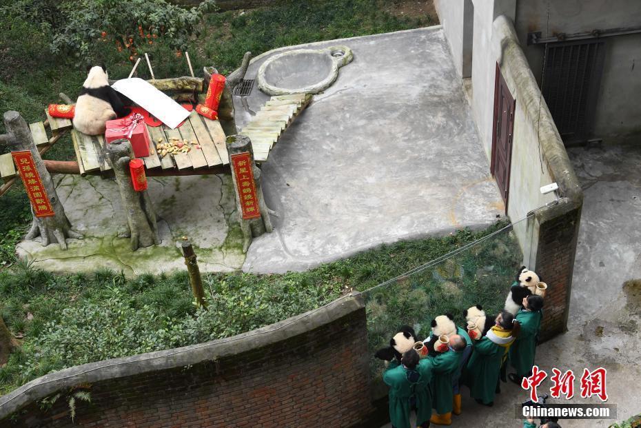瑞丽家居杂志世界现存最长寿圈养大熊猫过新年