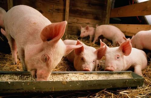 原创             电子产业链的利润,为什么会低于养猪?