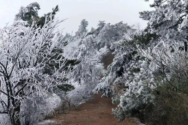 """北方的冰天雪一直是南方人的向往,其实冬天""""浙""""里的雾凇更美丽"""