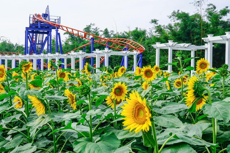 广州旅行丨春节游玩吃喝玩乐攻略