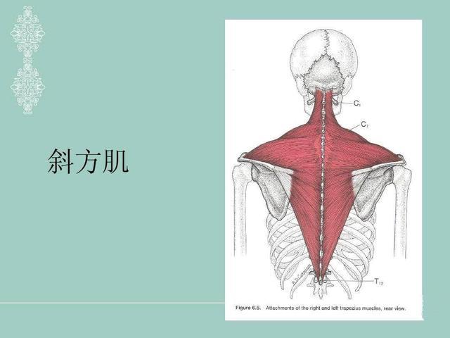 穿衣没气质可能是脖子的问题!脖短、溜肩、仪态差这样改善才对!