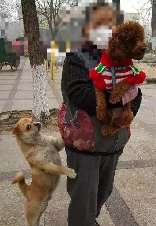 """""""狗是我们的好朋友,但土狗不是"""""""
