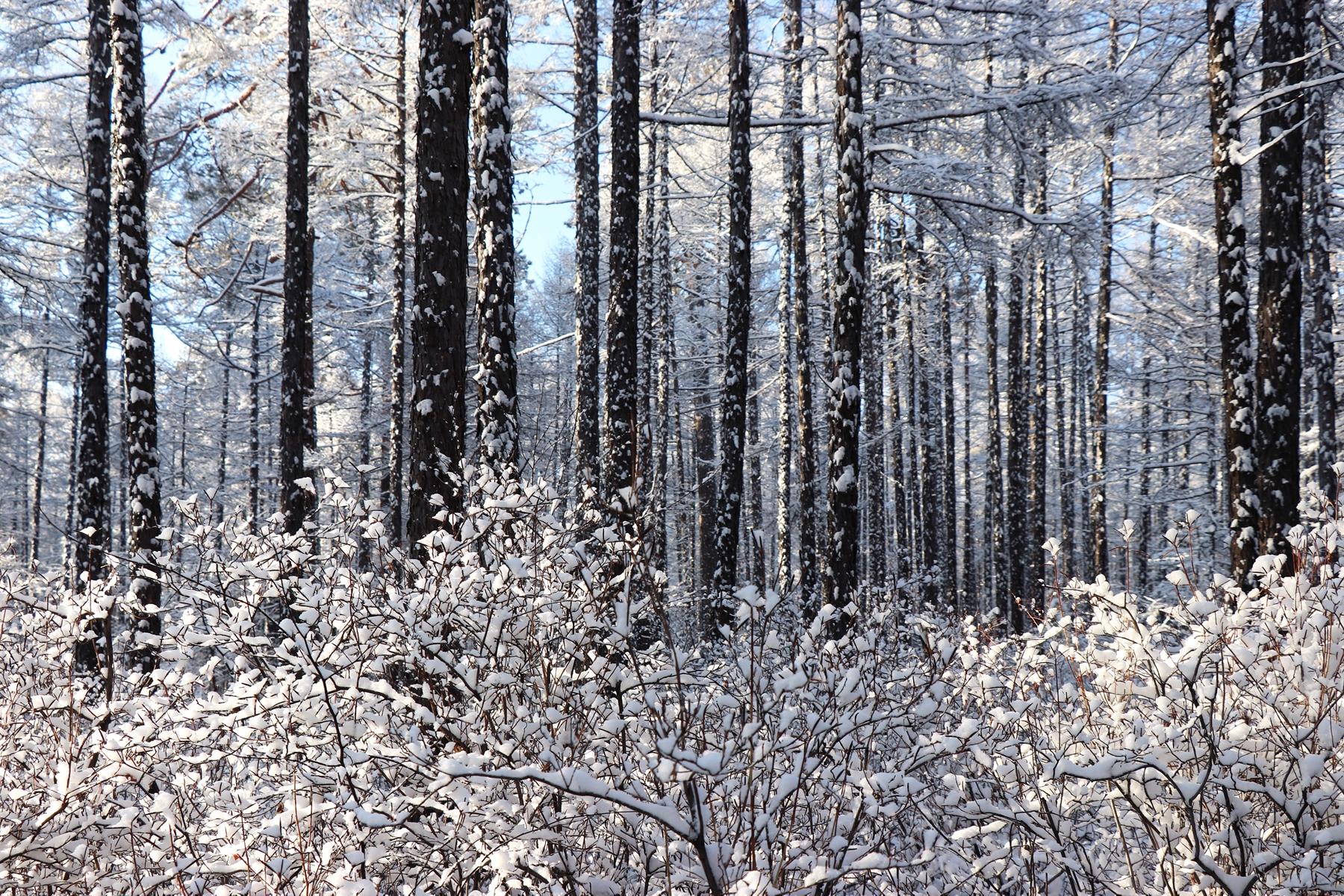 大美中国!大兴安岭新林区的冬天,雪覆千山,玉树琼林,仿如仙境