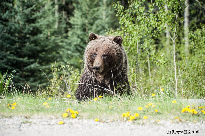 西游记黑熊精图片