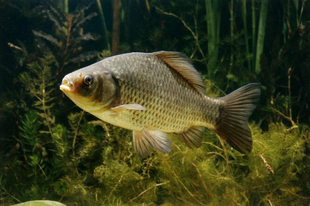黄河里面那么多淡水鱼,流入海水就会死,那不就亏了吗
