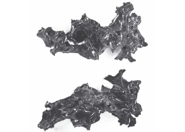 滅城維蘇威火山新發現,因溫度太高,人類大腦組織直接變成玻璃