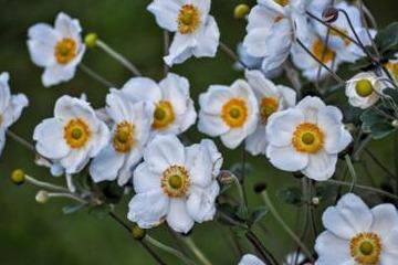 水仙黄叶是什么原因图片