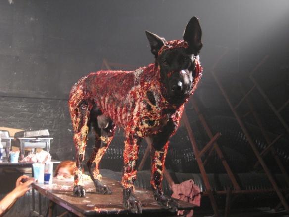 《生化危机》系列历代僵尸犬演变玩家最忠实的朋友