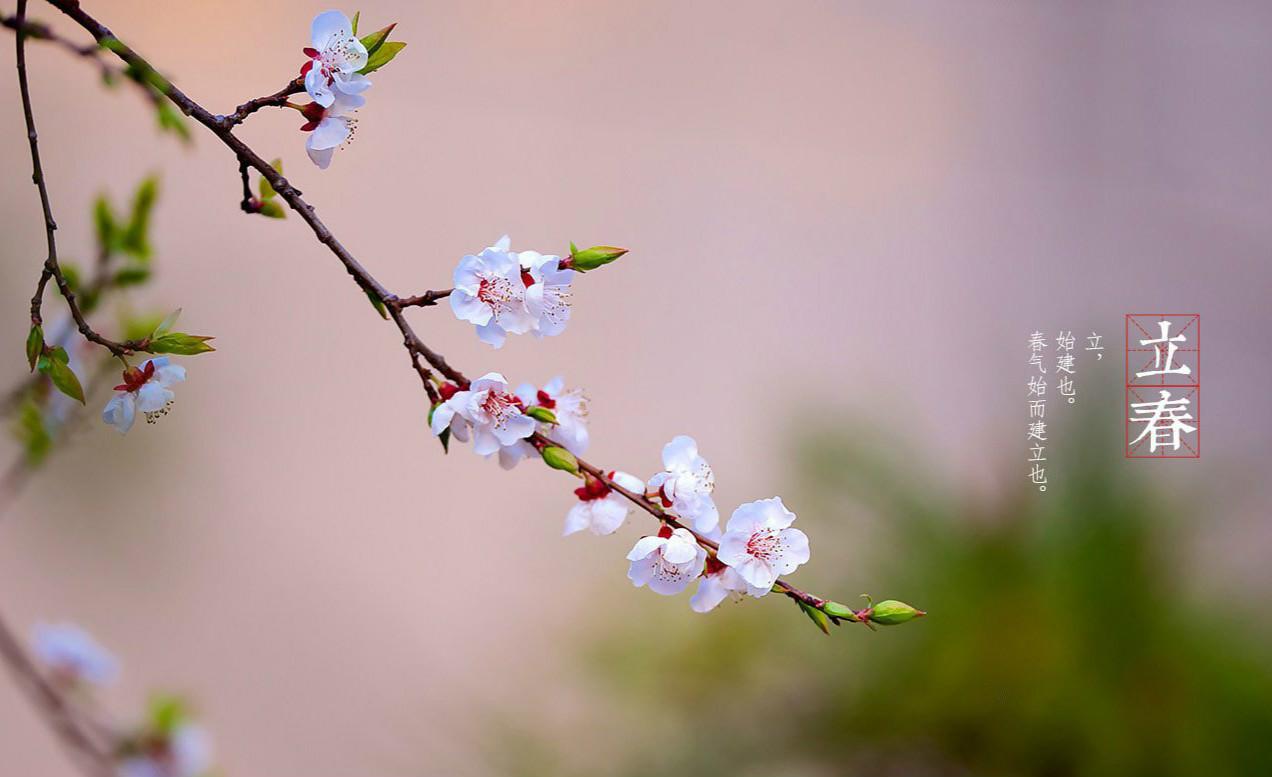 搜狐养生 立春就是一花一菜一头蒜!逾越严冬,拥抱暖春