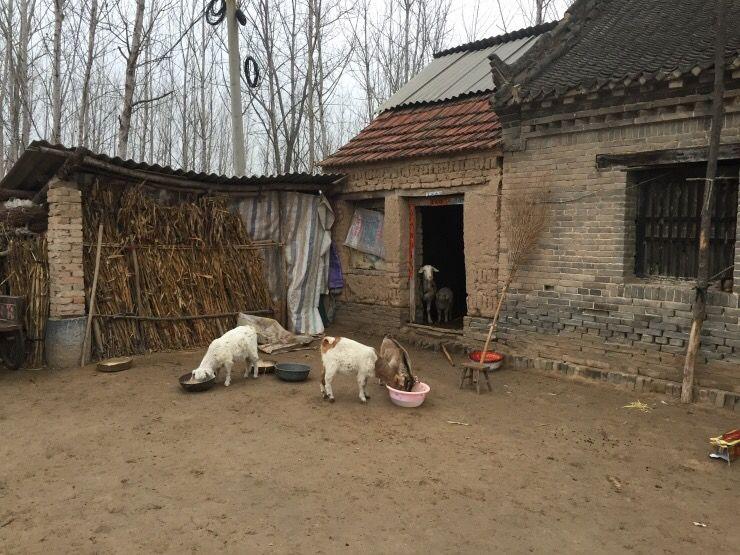 女儿怀孕,母亲送三斤羊肉,她嫌寒酸偷摸喂狗,隔天回娘家,傻住