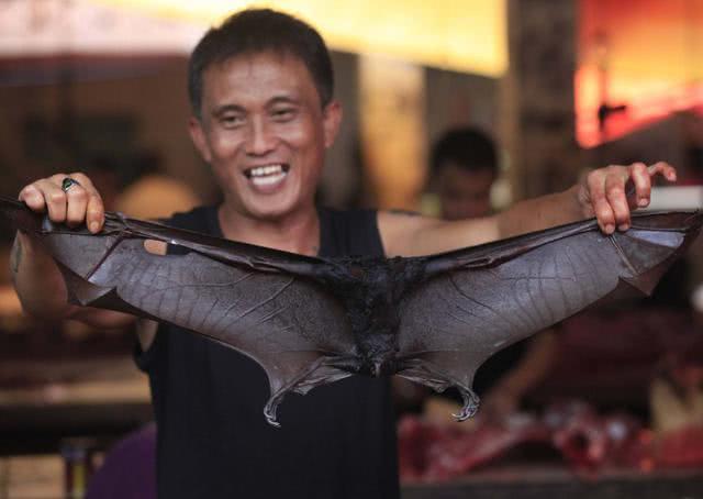 原创            印尼餐馆纷纷取消蝙蝠佳肴!老板:因携带病毒不敢再吃了!