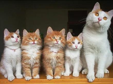 猫对怀孕初期有影响吗图片