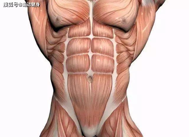 健身训练动作分解肌肉剖解图(建议保藏)