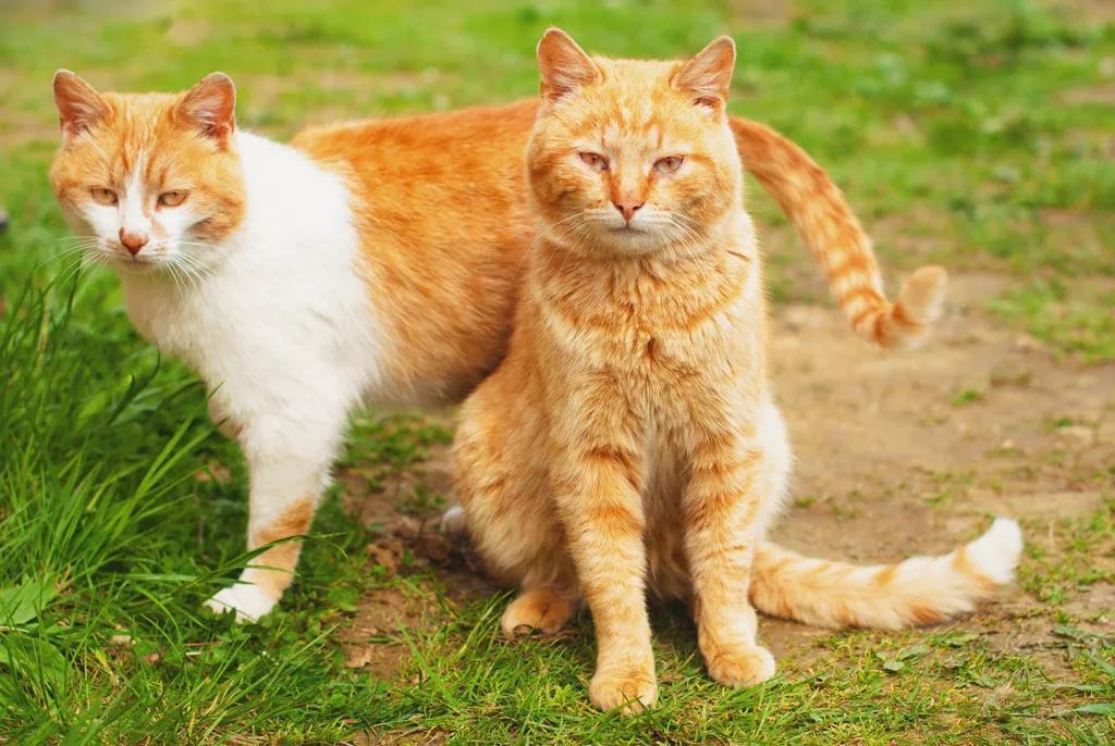 猫的对婴儿有危害嘛图片