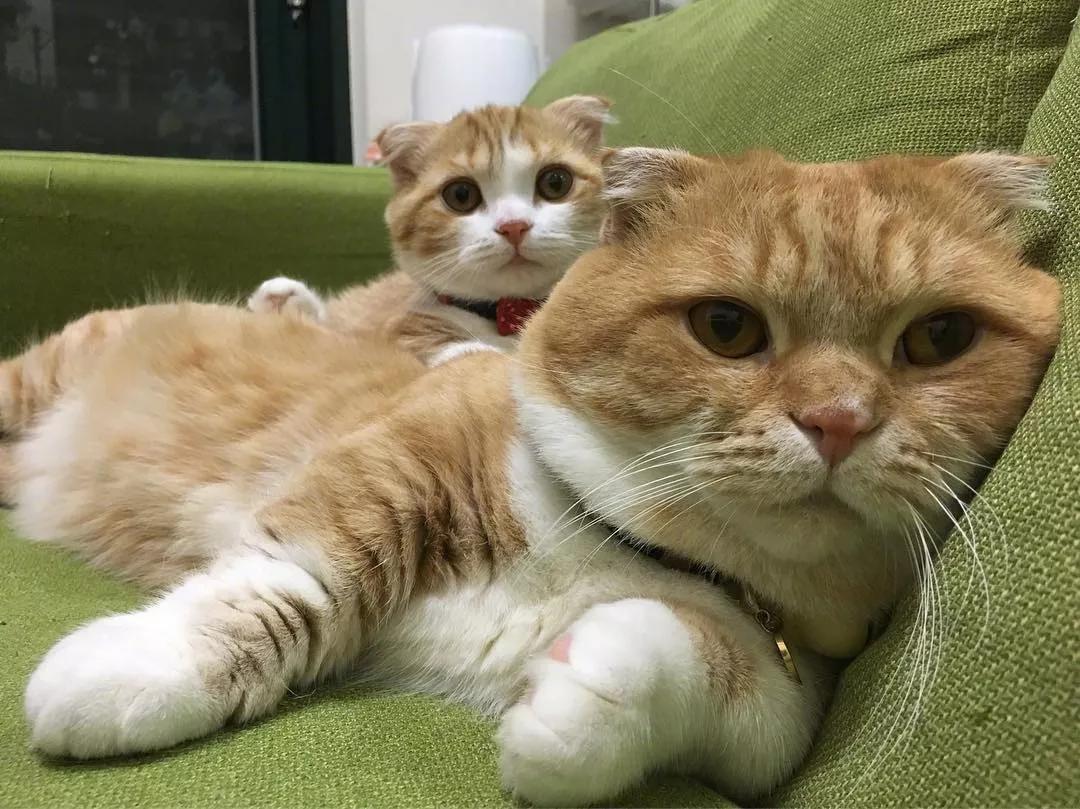 养猫对初生婴儿影响吗图片