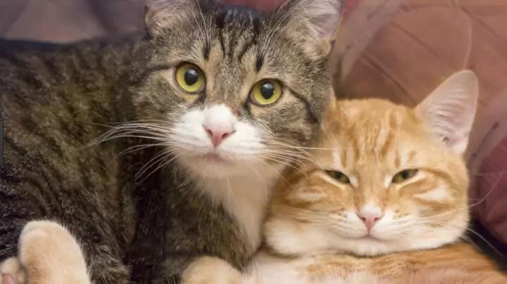 猫咪对婴儿有什么影响图片