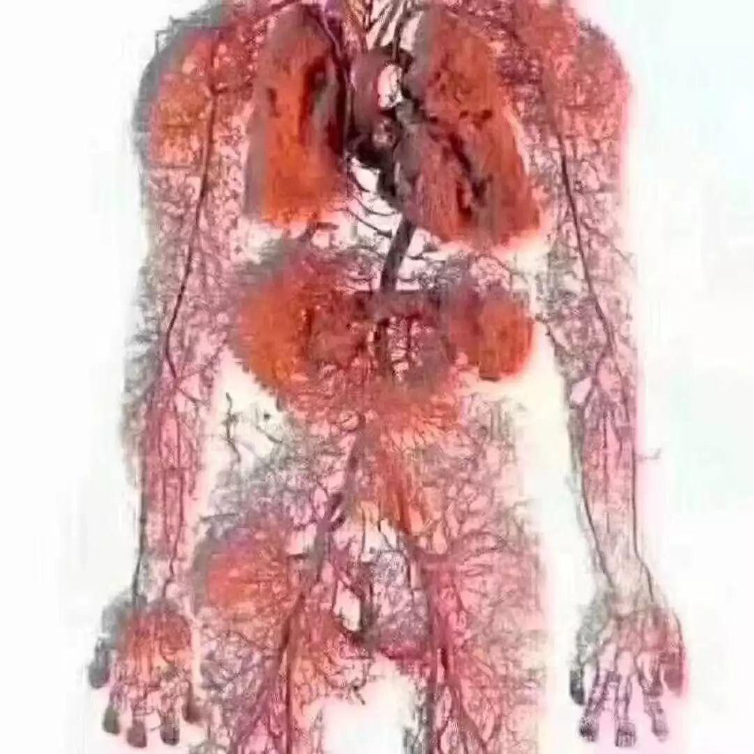 下图为人体血液循环过程模式图.请据图回答下列问题:(1)上图... -