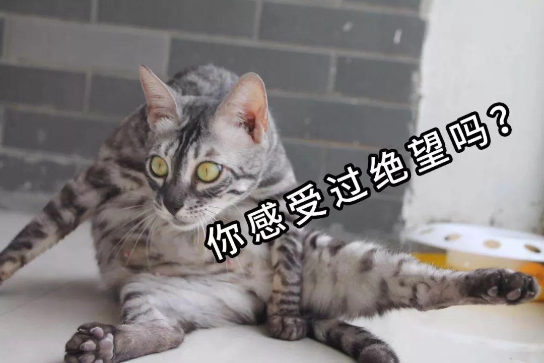 和平精英演唱会好评率仅10%,华晨宇也被连累,休思给