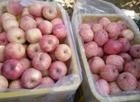 我坐月子亲妈送来两箱苹果,婆婆要扔,打开箱子后,全家傻住
