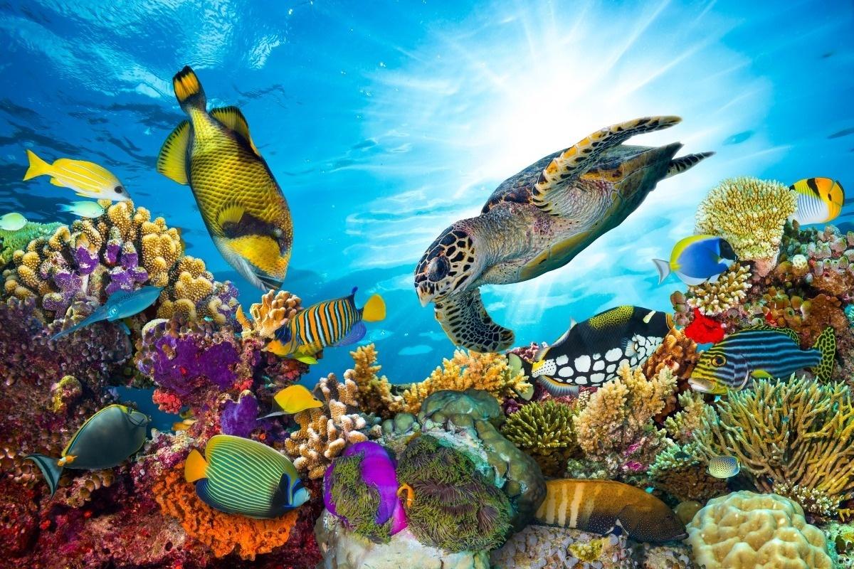 如果海上有仙境定是沙巴岛 景色媲美马尔代夫 来过便不曾离开