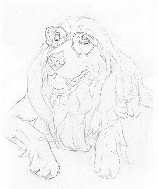 呆萌的狗狗和圆嘟嘟的小猪猪画法分享