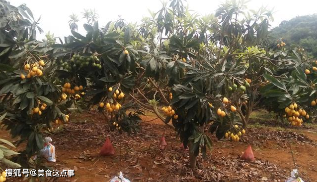 今年行情大涨,果子没熟就被预定,如今10元1斤,农民:太后悔了