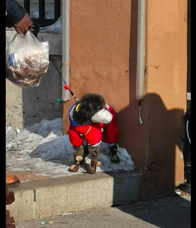 结果遇到了一位大爷刚带着狗狗买菜回来了,狗,我这个口罩挺好看,但是我怎么觉得狗狗会憋得慌呢