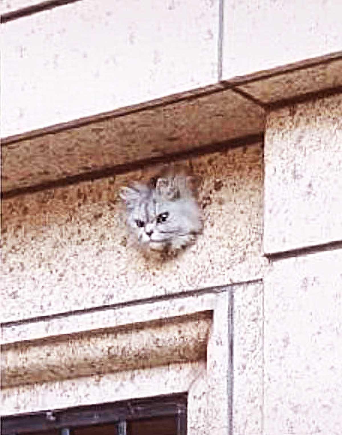 突然有1只面露凶相的猫咪,当女子定睛一看,女子知道实情后,女子哭了