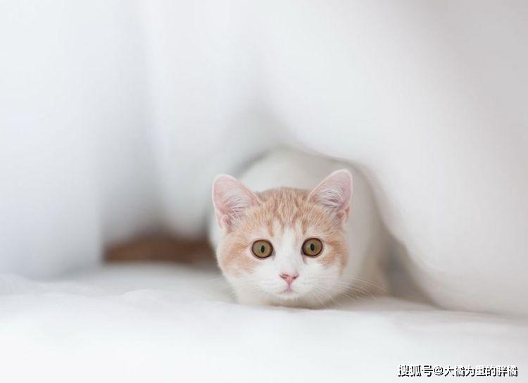 你以为自己养的是宠物猫,可没想到在猫的眼里,你却是孩子