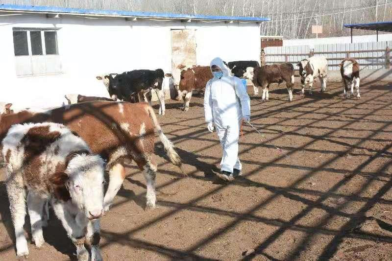 """新疆乌什县:为畜禽养殖撑起健康""""保护伞"""""""