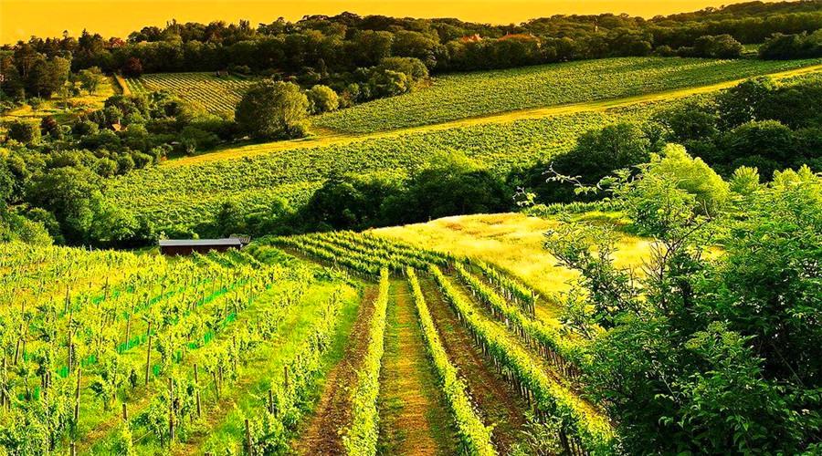 对田园生活情有独钟的星座,安逸、宁静,让人的内心更纯洁!