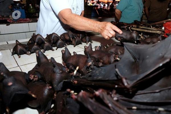 蝙蝠仍在印尼热卖,商贩称节假日一天最多可卖600只
